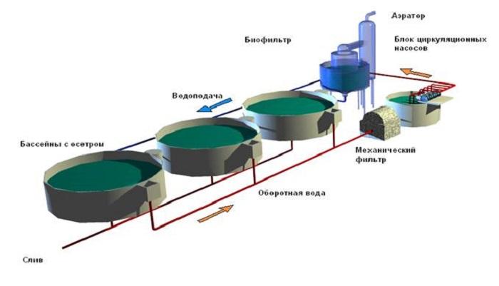 Температура воды для выращивания осетра 69