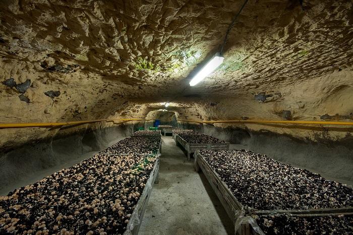 Подземная ферма по выращиванию шампиньонов