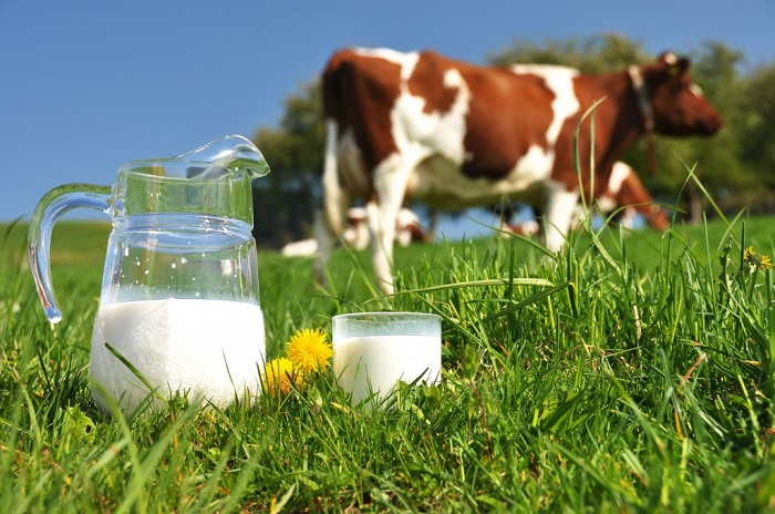 Изображение - Завод по переработке молока Mini-zavod-po-pererabotke-moloka-6