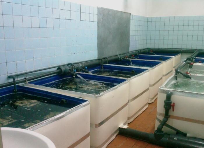 аквариумное разведение раков