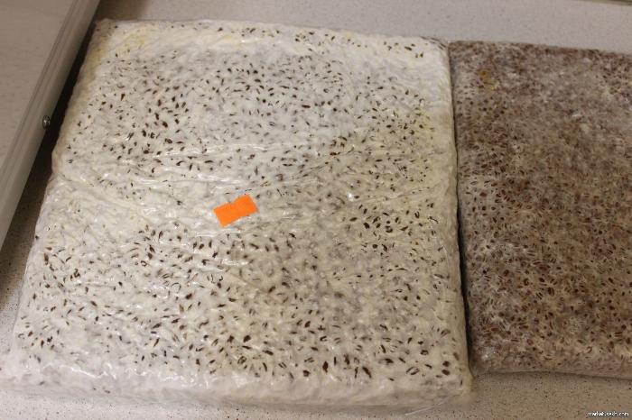Производственный мицелий