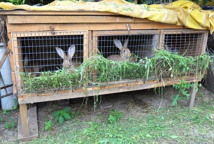 Как содержат кроликов?