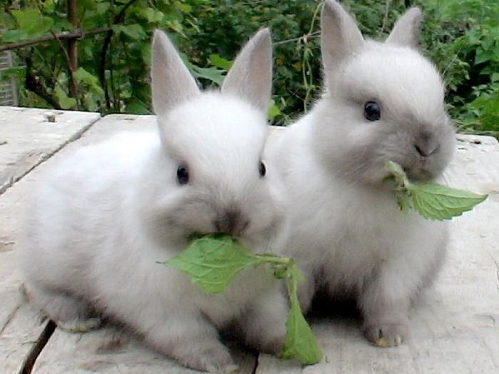 Почему разведение кроликов - прибыльный бизнес?