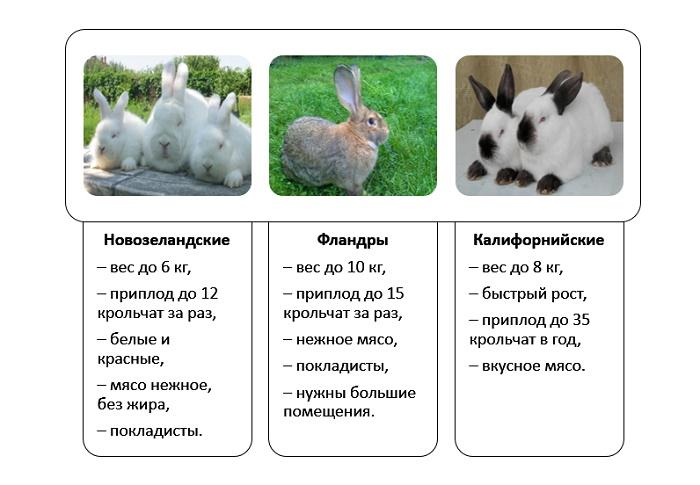 Какие породы кроликов относятся к мясным?