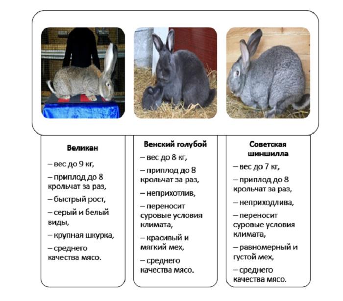 Какие породы кроликов относятся к мясо-шкурным?