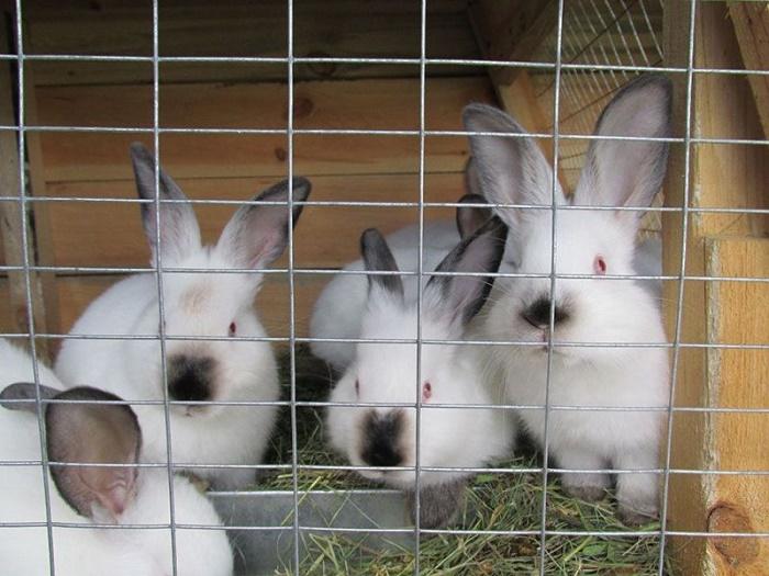 Когда окупится кроликоферма?