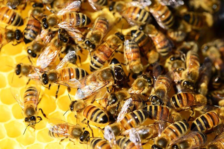 Как выбирать пчел