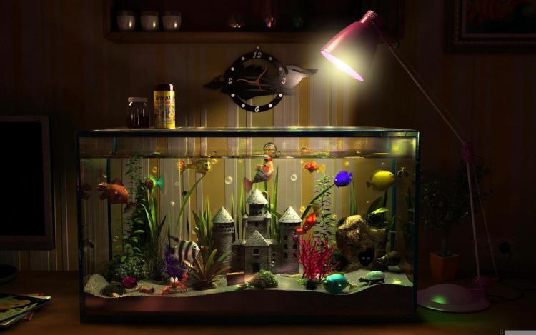 Выращивание аквариумных рыбок в домашних условиях