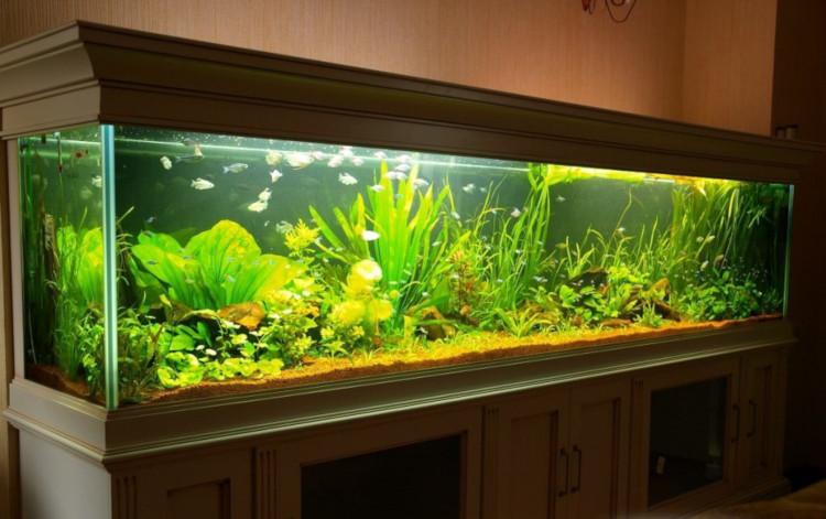 Большой аквариум дома