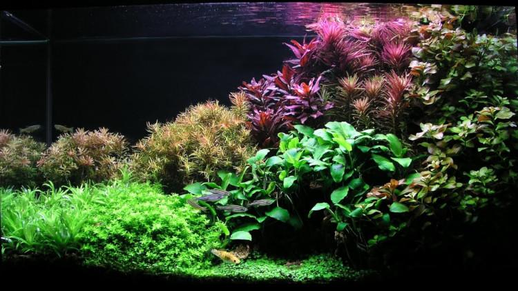 Выращивание аквариумных растений