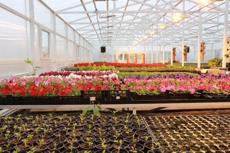 Магазин, цветы тепличные оптом