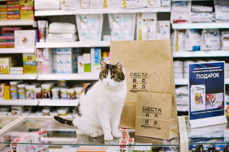 Лицензирование ветеринарной аптеки