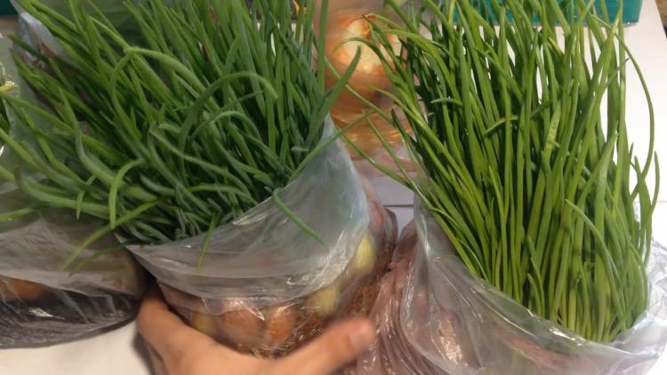 Зелёный лук в пакете с опилками
