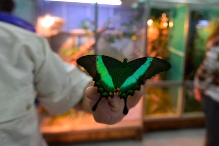 Разведение экзотических бабочек