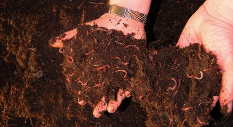 Разведение червей для биогумуса