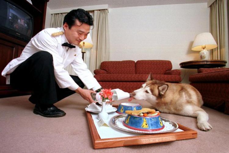 Изображение - Гостиницы для животных Gostinitsa-dlya-zhivotnyh-kak-biznes-2