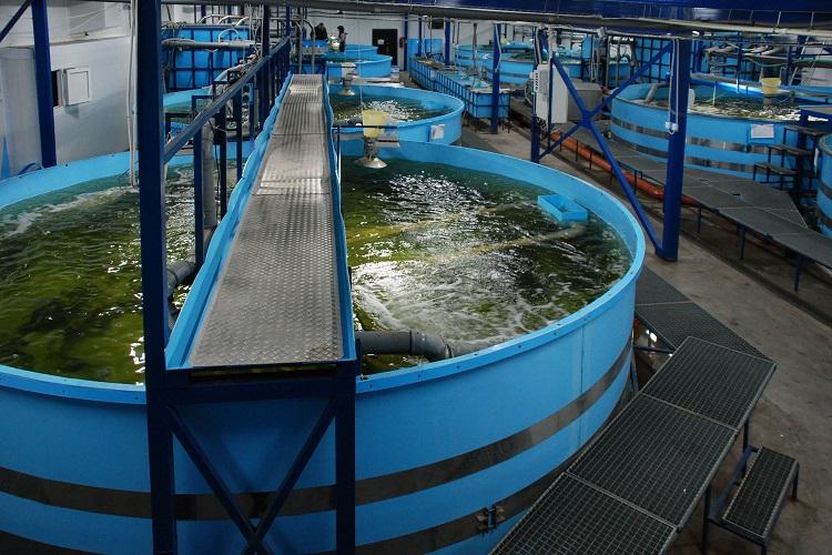 Оборудование для разведения рыбы