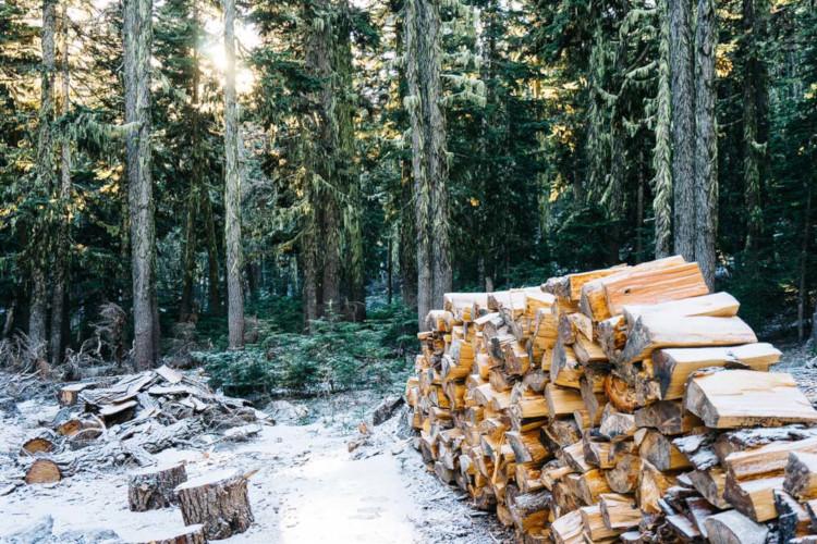 Рубка леса заготовка дров