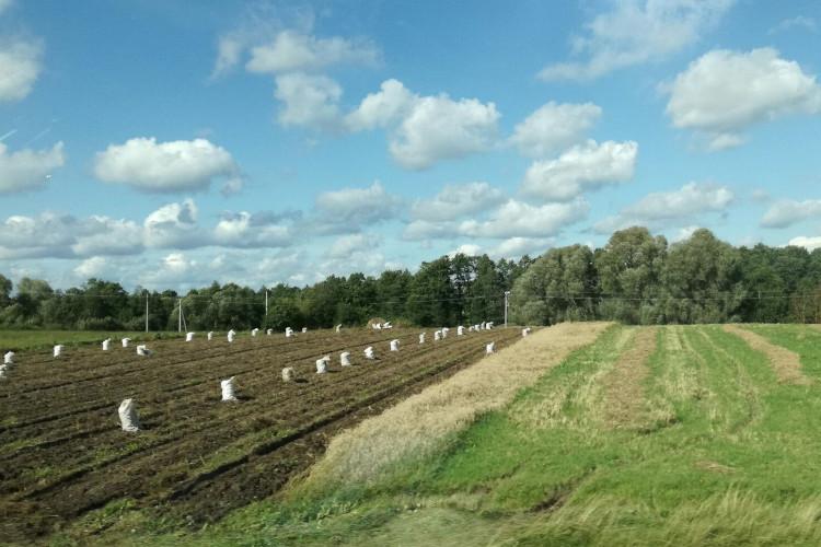 Земельный участок сельскохозяйственного назначения