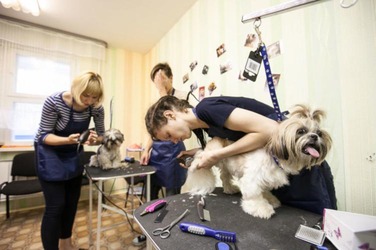 Стрижка собак в салоне