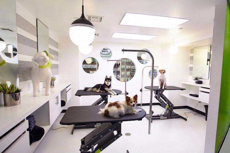 Интерьер салона красоты для животных