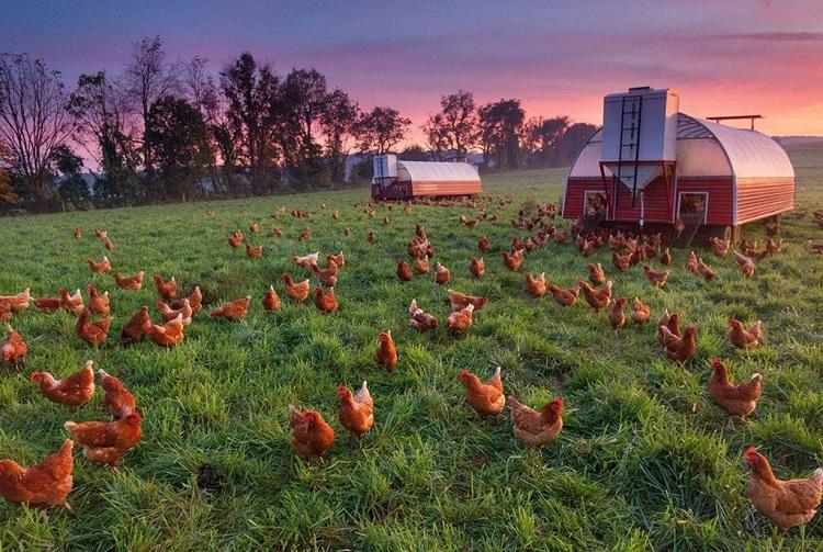 Бизнес план сельскохозяйственного предприятия
