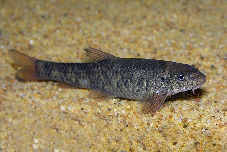 Рыбки которые делают пилинг