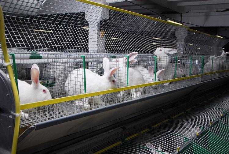 Разведение животных в домашних условиях как бизнес